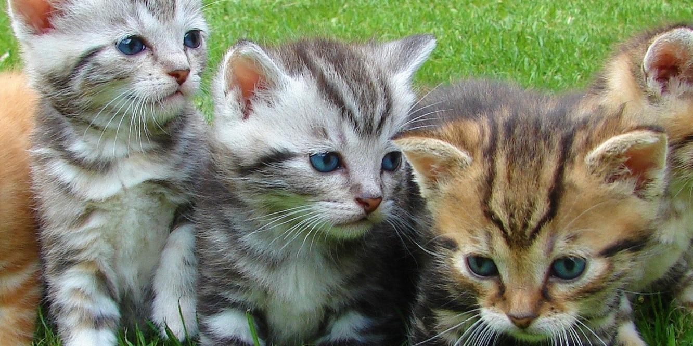 #猫 #ボランティア #講座 #可愛い