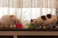 猫のご飯タイム
